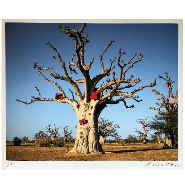 Wackerbarth: »Baobab (Affenbrotbraum) 2019«