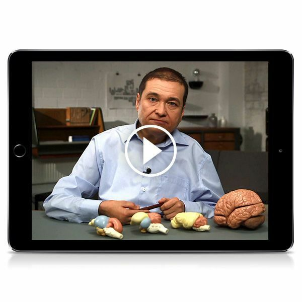 »Unser Gehirn«-Seminar